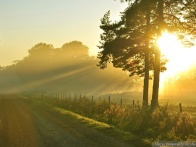 4dac2cba44628571-old-road-summer-morning-wallpapers-1024x768