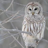 5417c0ce09fcd5a3-owl